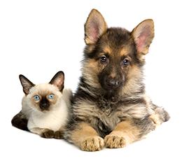dog and cat posing on white background