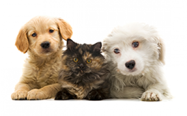 2 dogs and one cat posing on white background